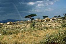 Pipeline key to unlock African reserves