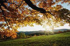 Tennessee Gas Pipeline announces successful Open Season